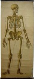 Serie - Zes anatomische wandplaten