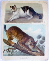 Serie - Hartingers Wandtafeln f�r den naturgeschichtlichen Anschauungsunterricht, Abteilung I: Zoologie