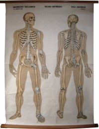 Serie - Anatomische Wandplaten