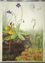 Serie - SSW. Pflanzen in ihrem Lebensraum