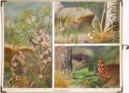 Serie - Bilder av svenska djur [Vlinders, Max Richter]