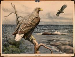 Serie - Bilder av svenska djur [Wilde dieren, Nils Tiren]