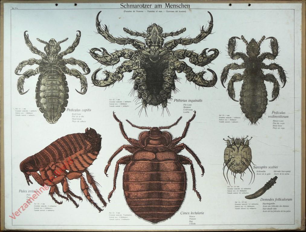 Verzameling in beeld - Serie - Lehmann-Leutemann - Zoologischer Atlas