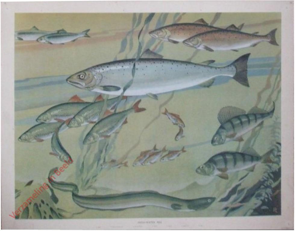 Verzameling in beeld serie useful animals of the world for Freshwater fishing in massachusetts