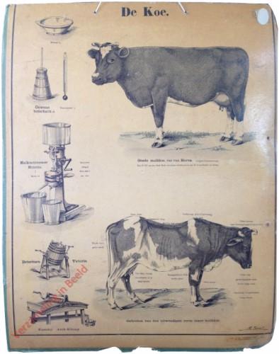 13? - De koe