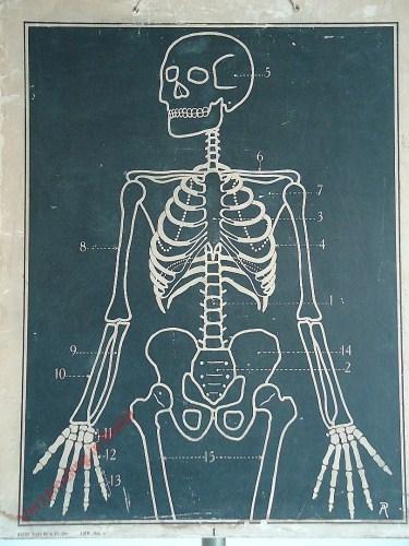 [Skelet bovenkant]