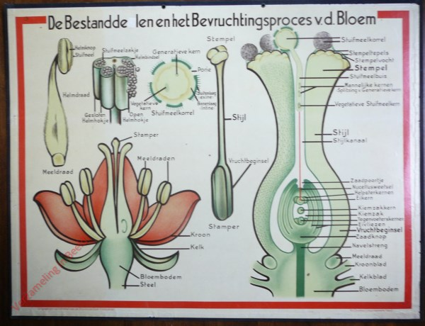 De Bestanddelen en het Bevruchtingsproces v.d. bloem