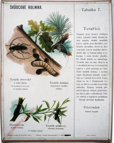 7 - Tesarici