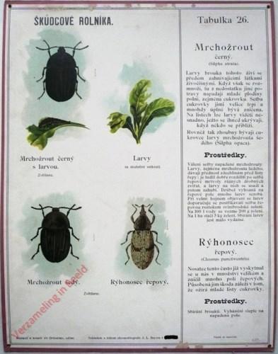 26 - Mrchozrout. Ryponosec