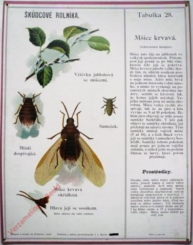 28 - Msice Krvava