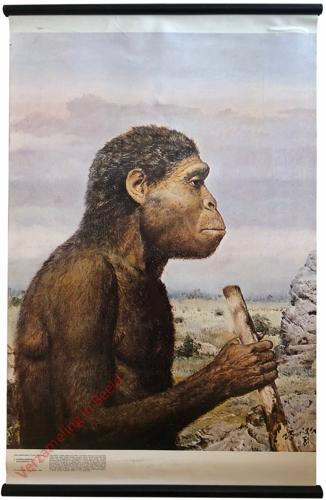 2 - Australopiték