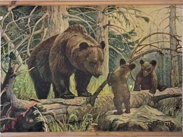 8 - Medv?d hn?dý