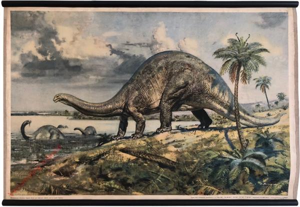 7 - Brontosaurus (Apatosaurus)