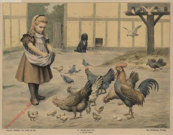 A. Husdyrenes Liv. 5 - H�nsene fodres