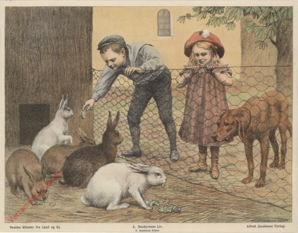 A. Husdyrenes Liv. 8 - Kaninerne fodres