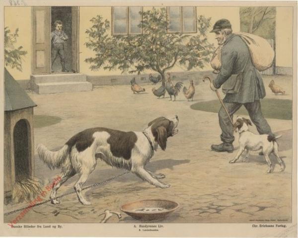 A. Husdyrenes Liv. 9 - L�nkehunden