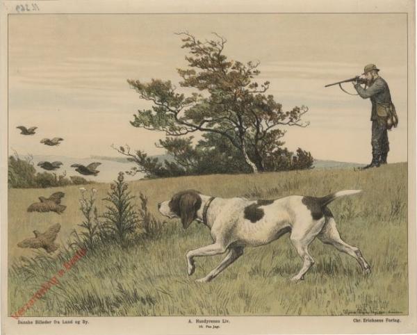 A. Husdyrenes Liv. 10 - P� jagt
