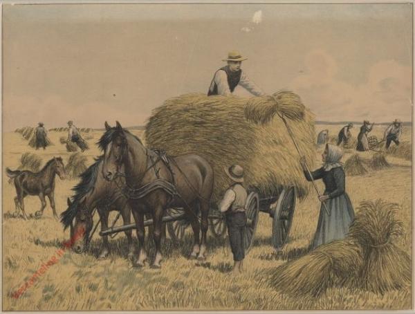 B. Hvorlodus Brodet bliver til. 14 - Kornet h�stes