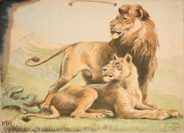 DB 101 - Leeuw en leeuwin [2e druk]
