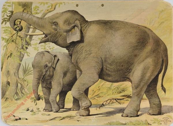 DB 104 - Indische olifant