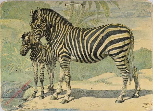 DB 111 - Zebra [2e druk]