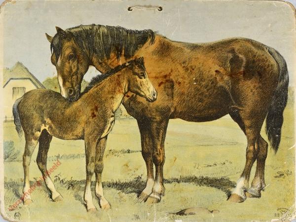 DB 113 - Paard