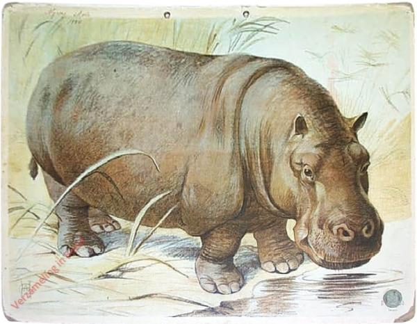 DB 135 - Nijlpaard