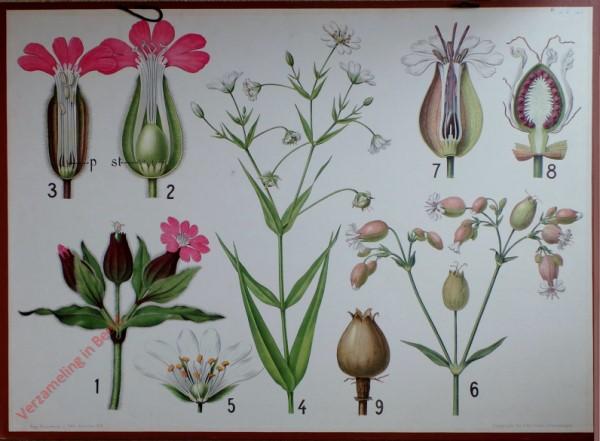 19 - Dagkoekoeksbloem, Blaassilene, Vogelmuur