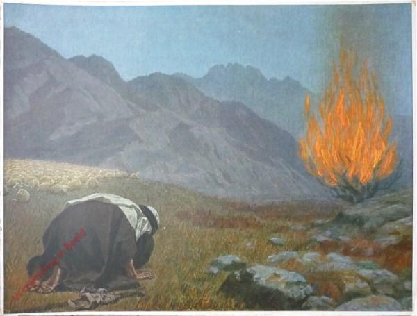 10 - Het brandende braambos
