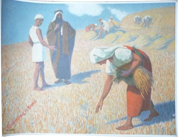 17 - Ruth bij het arenlezen