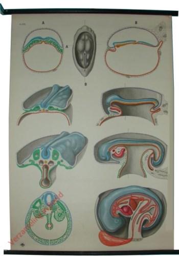 9751 - Ontwikkeling van het embryo I