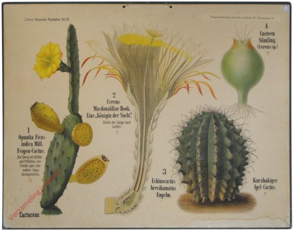 10 - Cactaceae