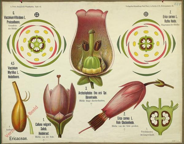 41 - Ericaceae