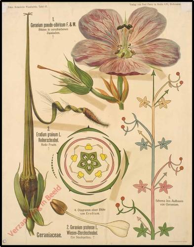 65 - Geraniaceae