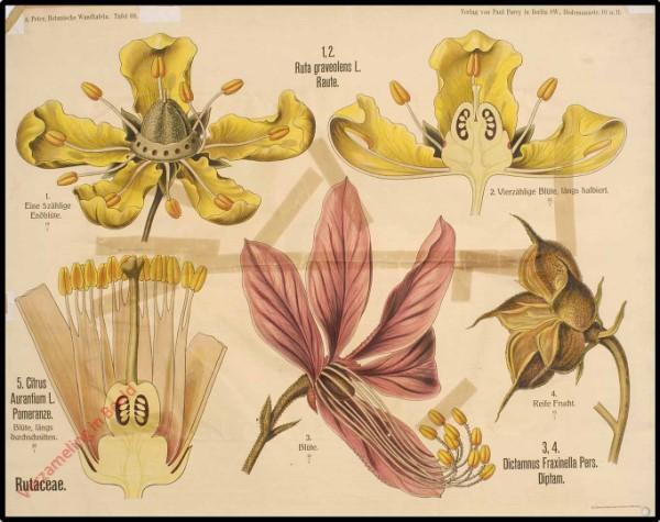 69 - Rutaceae