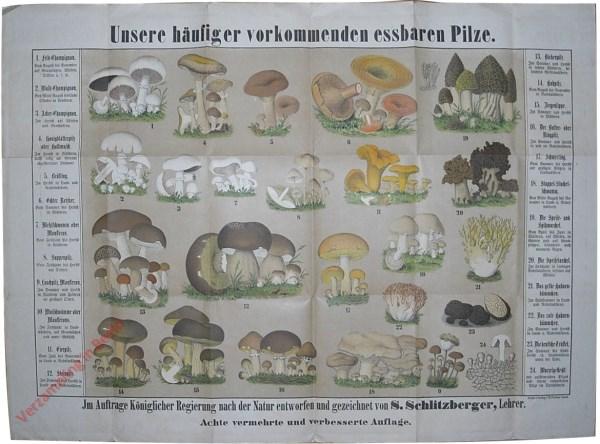 Unsere h�ufiger vorkommenden essbaren Pilze