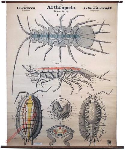 III - Arthropoda. Crustacea. Arthrostraca (II)