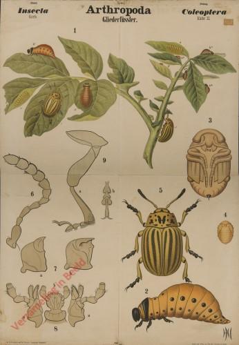 VI - Arthropoda. Insecta. Coleoptera