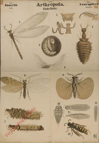 IX - Arthropoda. Insecta. Neuroptera