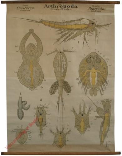 XXV - Arthropoda. Crustacea. Copepoda