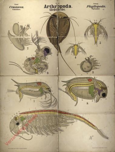 XXVI - Arthropoda. Crustacea. Phyllopoda