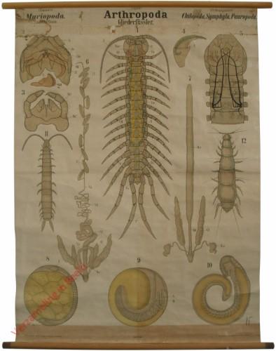 XXXII - Arthropoda. Myriopoda. Chilopoda, Symphyla, Pauropoda