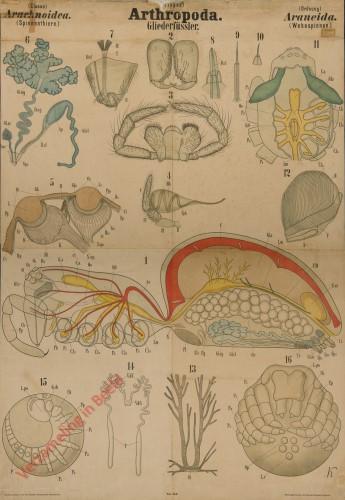 XLII - Arthropoda. Arachnoidea. Araneida