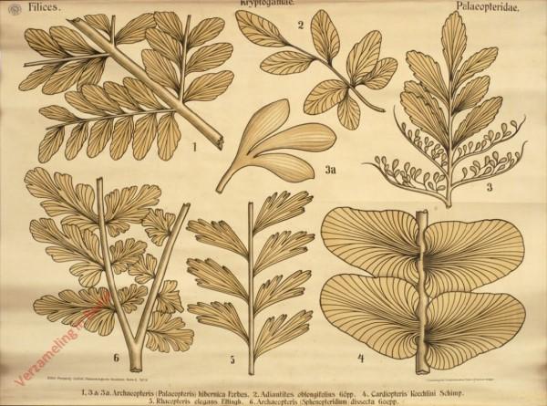 Reihe II. Taf. IX - Filices. Kryptogamae. Palaepteridae