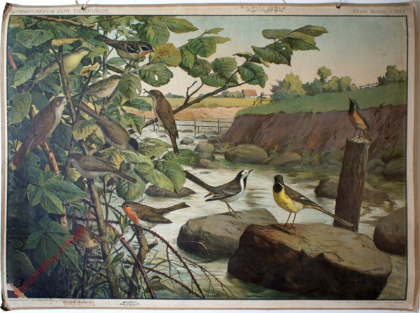 Erste Reihe: 1. Bild - [Vögel am Fluss]