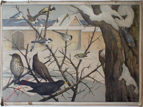 Erste Reihe: 3. Bild - [Vögel im Winter]