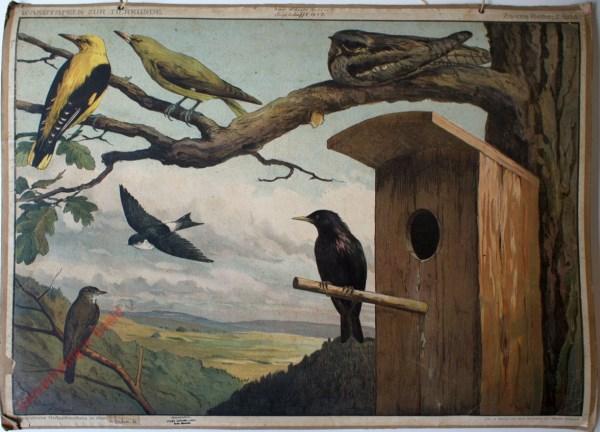 Zweite Reihe: 2. Bild - [Vögel im Wald]