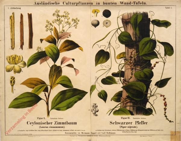I. Abteilung, 3 - Ceylonischer Zimmtbaum, Scharzer Pfeffer