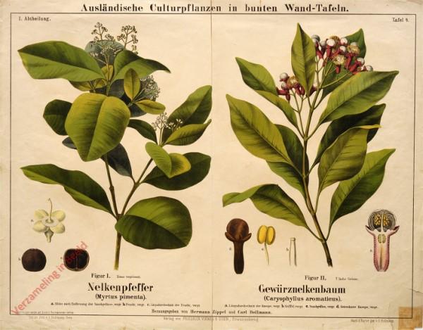 I. Abteilung, 4 - Nelkenpfeffer, Gewürznelkenbaum