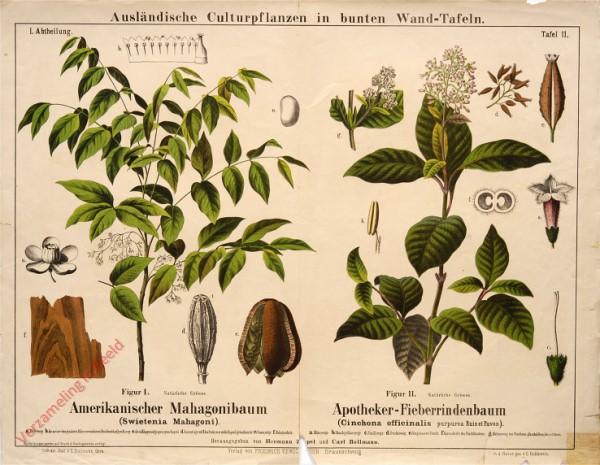 I. Abteilung, 11 - Amerikanischer Mahagonibaum, Apotheker-Fieberrindenbaum